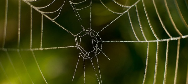 Distinctive spiderweb pattern with hanging morning dew drops on each of the threads. They sort of resemble strings of crystal pearls.